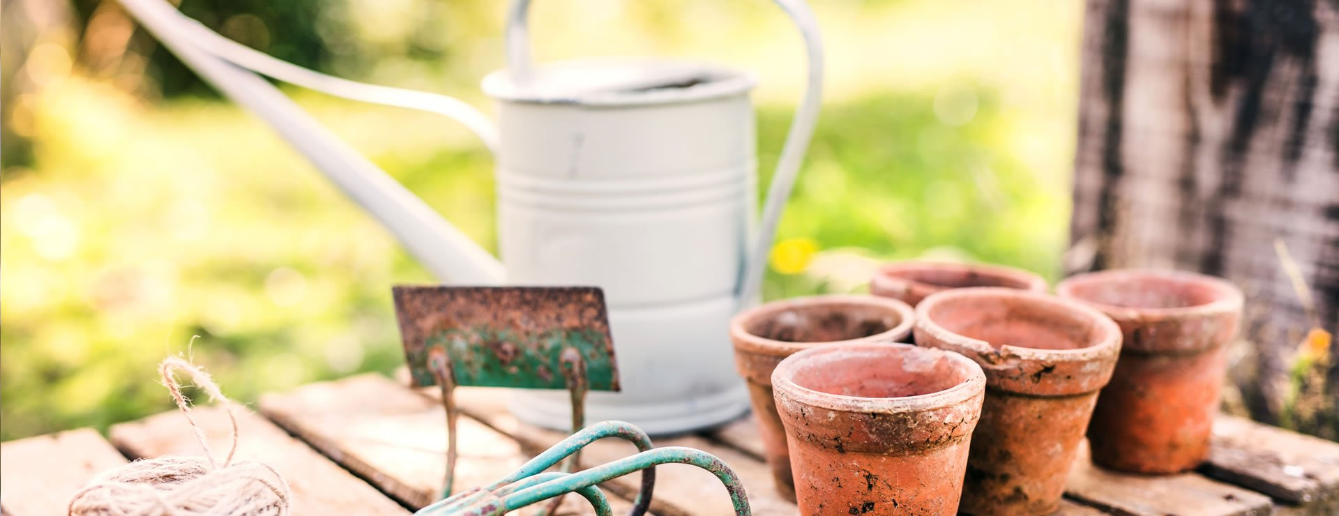 Buying Hedge Plants: Container Grown, Bare Root or Root Balls?