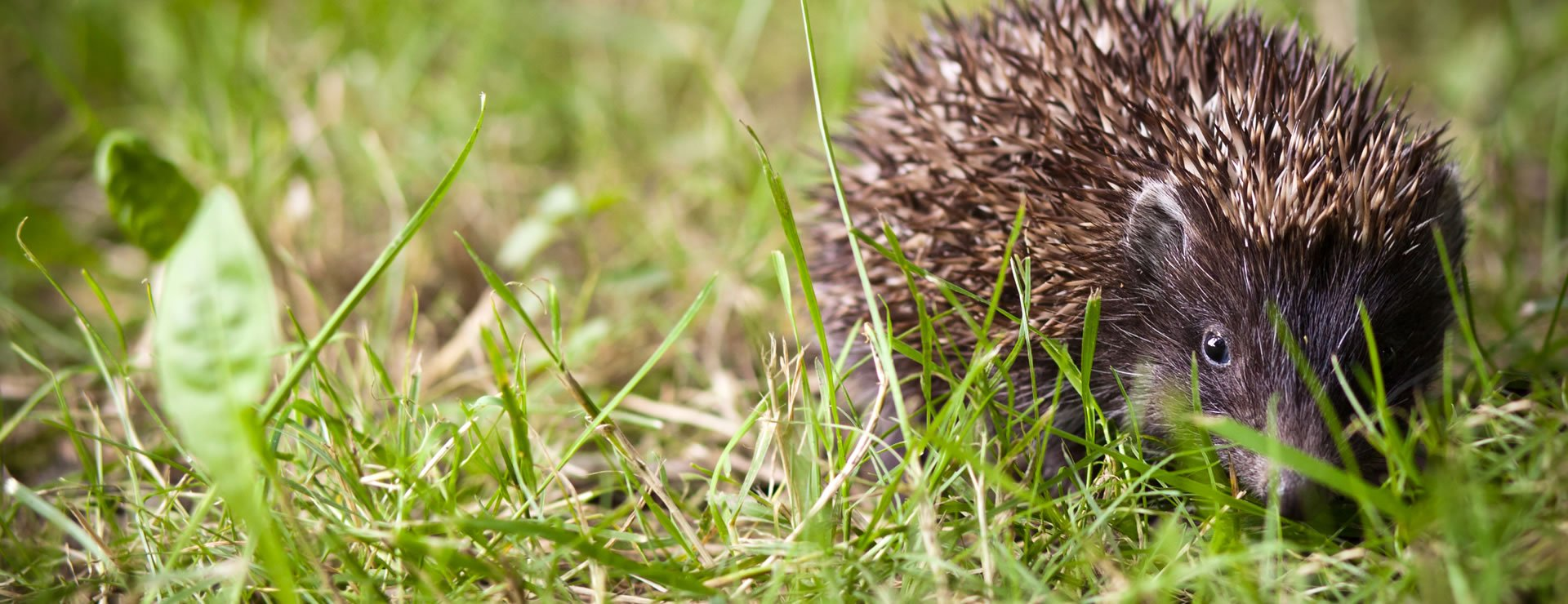 Hedges and Hedgehogs (Part 2 of 3)