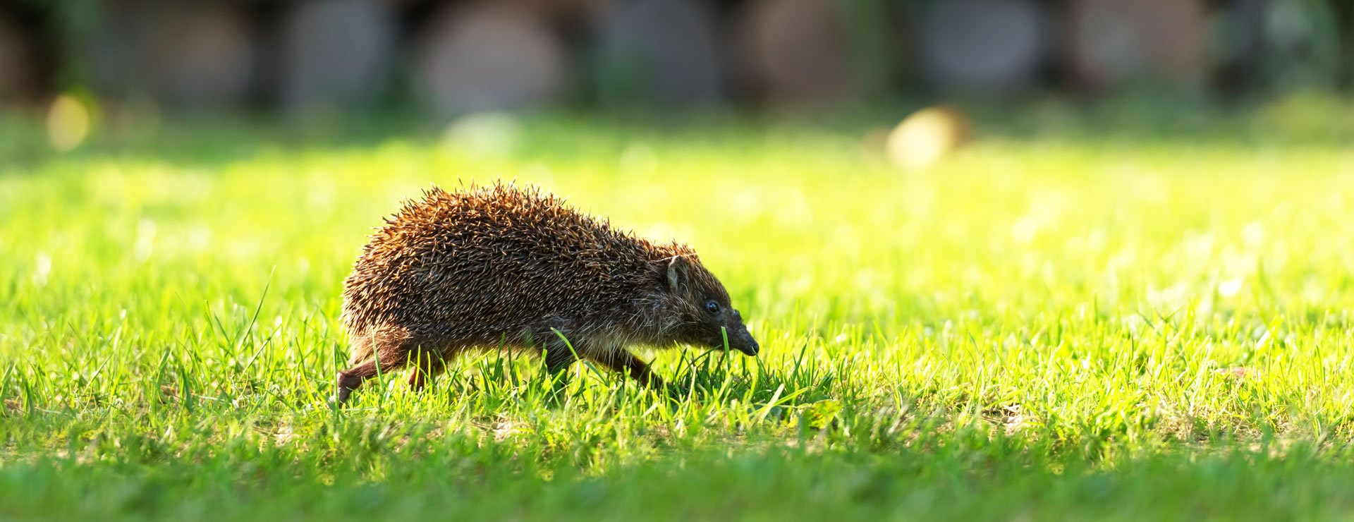 Hedges and Hedgehogs (Part 3 of 3)