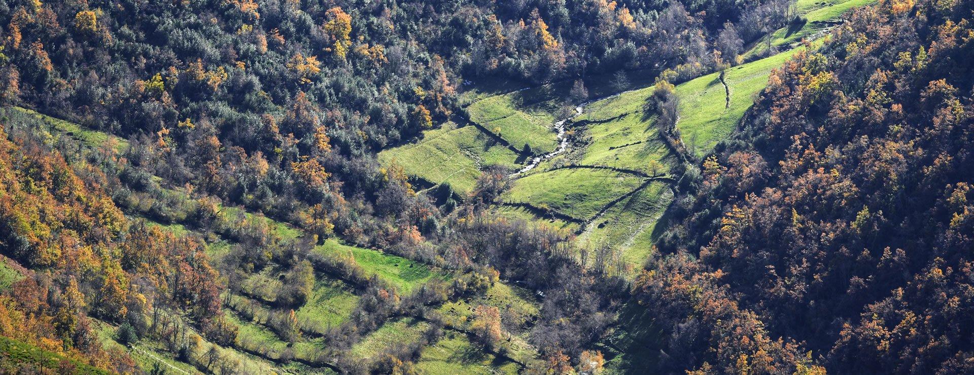 Hedge Fertilisers – An Introduction