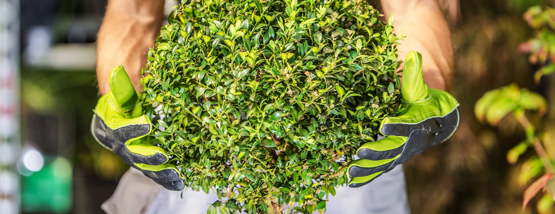 Topiary Guide – Knots, Parterres And Mazes