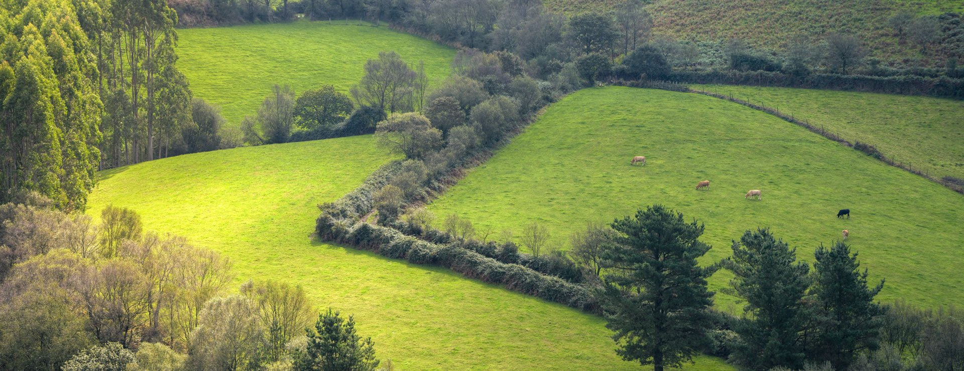 Why you should choose Yew Hedges