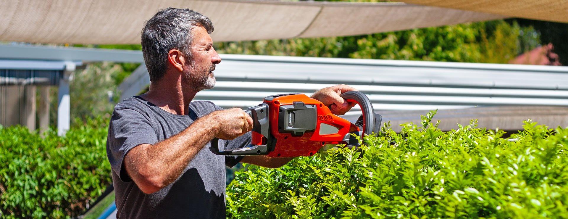 Privet Hedge Care – A Guide for Healthy Privet Hedges