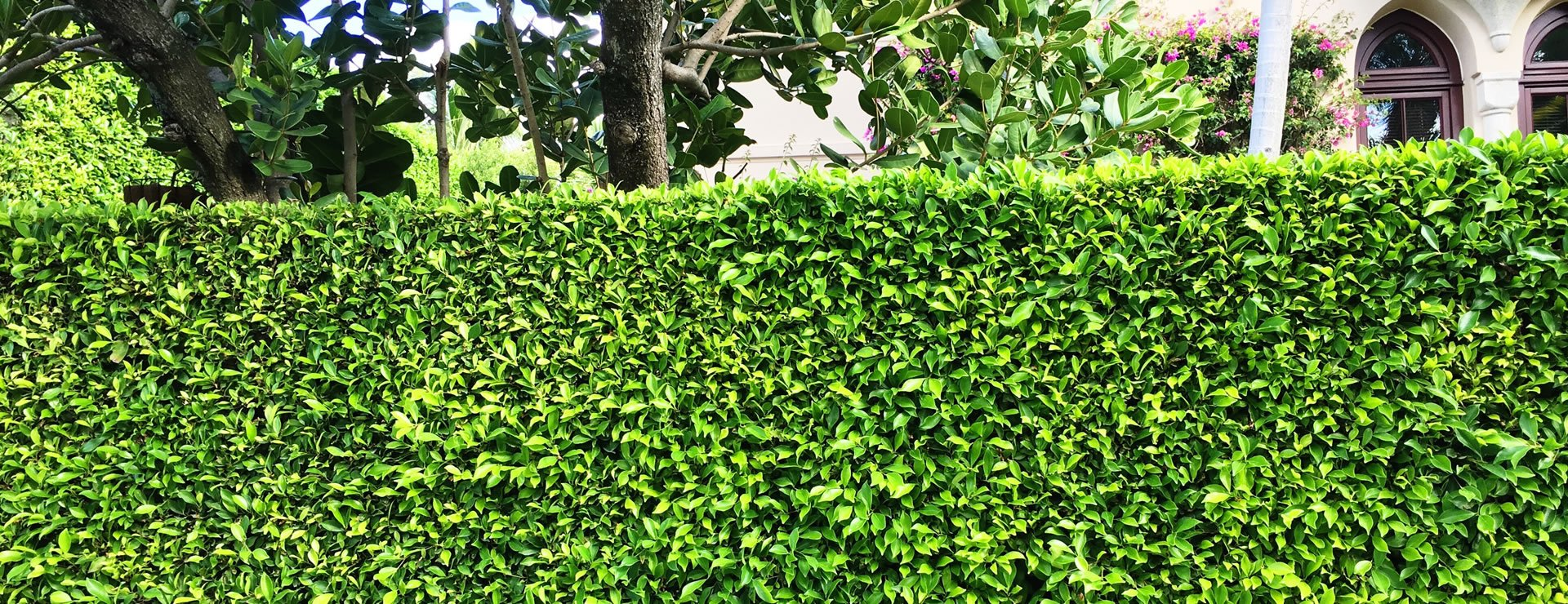 Quick Growing Hedges for Privacy